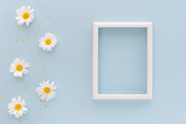 White daisy flowers and pollen near blank picture frame on blue background
