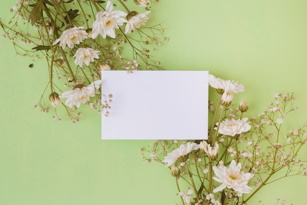 White daisy flowers with blank white paper over green background