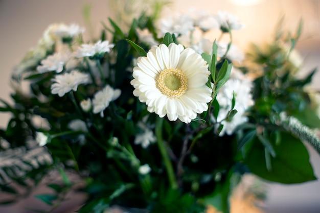 Белая маргаритка в вазе крупным планом, весенний интерьер с различными зелеными листьями