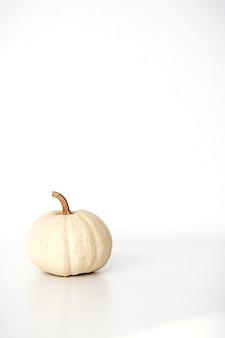 White decorative mini pumpkin isolated on white background. fall background. halloween or thanksgiving celebration.