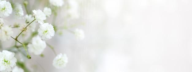 テキスト用のコピースペースを備えた、赤ちゃんの息の花のカスミソウの白い繊細な配置。ソフトフォーカス。バナー。