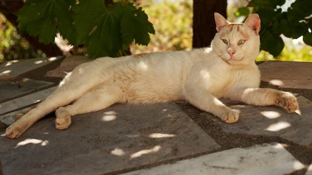 흰색 더러운 노숙자 고양이