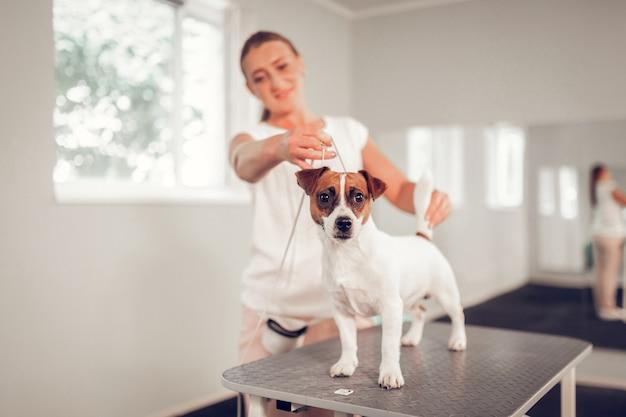 白犬。現代の獣医クリニックで金属製のテーブルの上に立っている白いかわいい犬のクローズアップ
