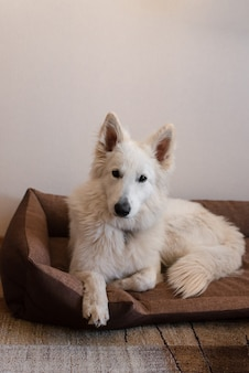 Белая собака лежит на кровати собаки