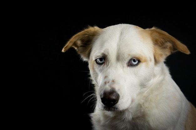 黒い背景の右側に白い犬
