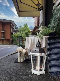 通りのカフェのテーブルの近くに座っている白い犬