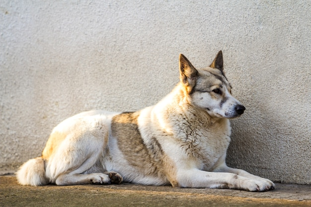 White dog sitting near old house wall