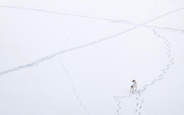 一人で立って、冬に凍った湖の側を持ち上げようとしている白い犬
