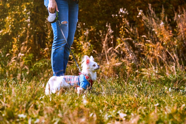 White dog standing next to his owner