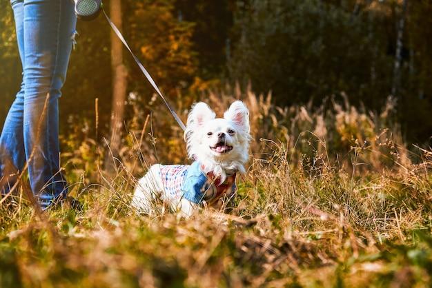 飼い主の隣に立っている白い犬