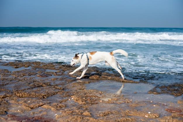 Белая собака гуляет по пляжу в окружении моря под солнечным светом и голубым небом