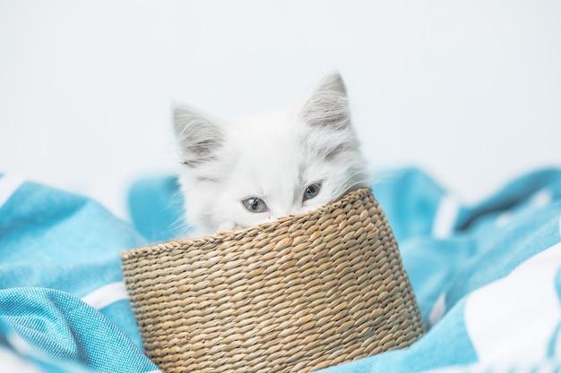 白い毛布面白いポーズでベッドに横たわっているバスケットの白い国内の子猫