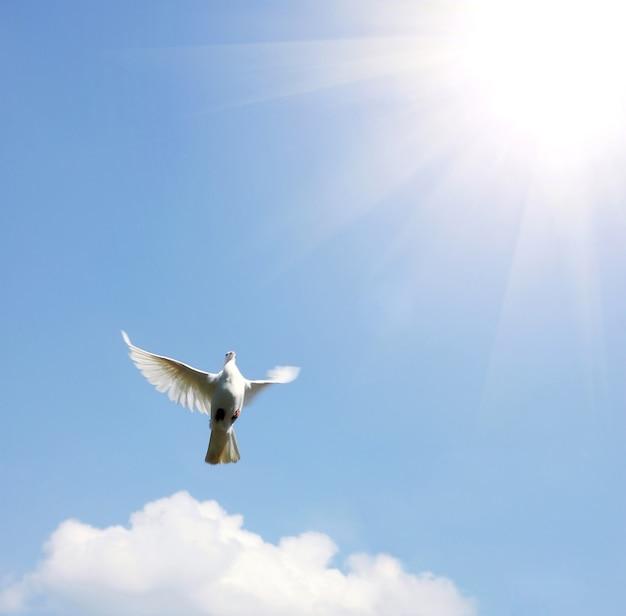 태양 앞에서 날개를 활짝 펴고 공중에 떠 있는 하얀 비둘기