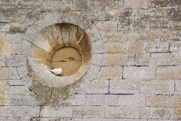 White dove perched in the hollow of a round window of a stone wall
