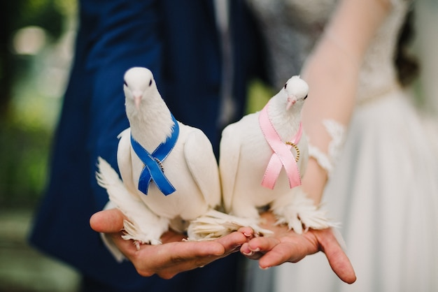 White doves decorated with ribbons on hands as symbol peace