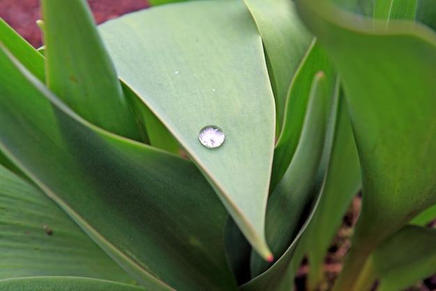 Белая капля на зеленом листе