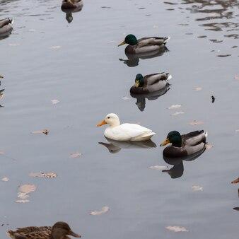 공원에서 흔히 볼 수 있는 흰오리