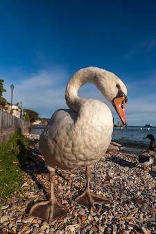 Белая утка на голубом небе как. озеро гарда, италия
