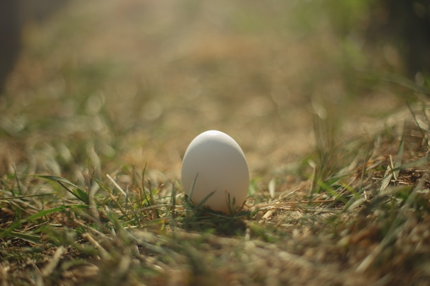 White egg stands on dry grass
