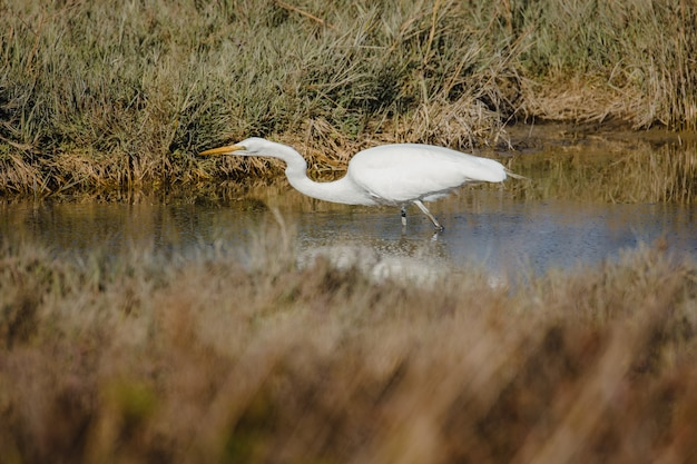 White egret on water during daytime