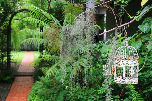 White empty bird cage in a tropical garden with bricks paved walkway