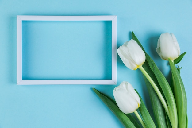 White empty frame with fresh tulips against blue background