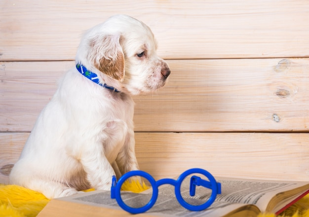 Белый английский сеттер щенок читает книгу