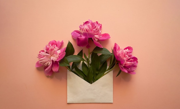 Белый конверт с розовыми пионами внутри на розовом фоне. шаблон для информационных бюллетеней и других почтовых оформлений.