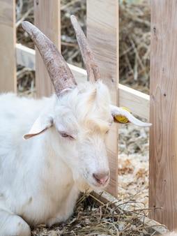 White farm kid in the pen.