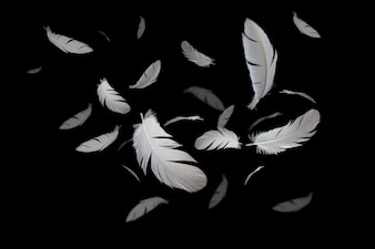White feather floating in darkness.