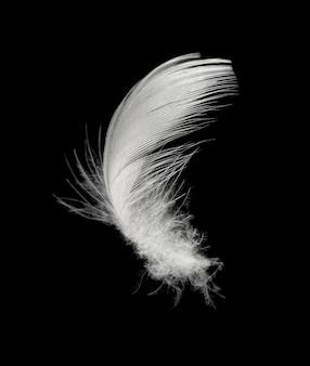 White feather isolated on black background