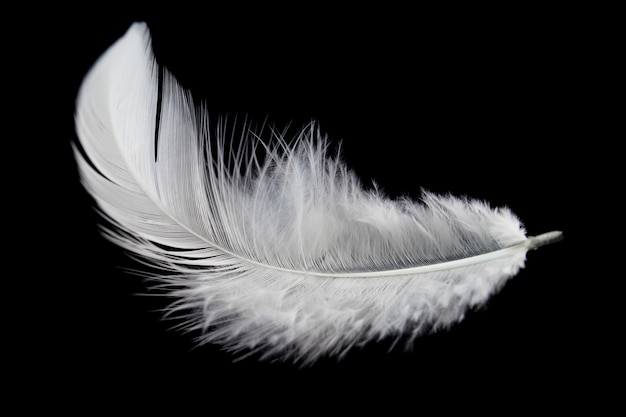 White feather isolated on black background.