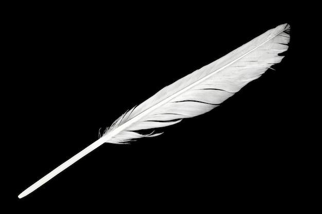 Белое перо на черном фоне
