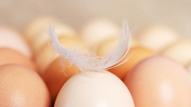 トレイの鶏卵の白い羽