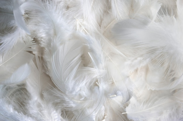 White feather texture background.
