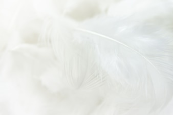 白い羽のテクスチャの背景