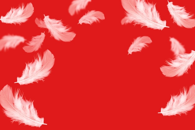 White feathers falling down on red