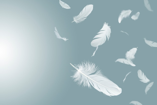 White feathers float in the air.