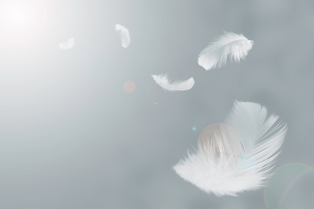 White feathers floating in the air.