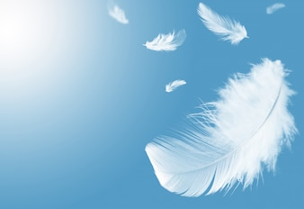 White feathers floating in a blue sky.
