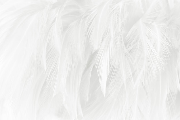 白い羽毛のテクスチャの背景。