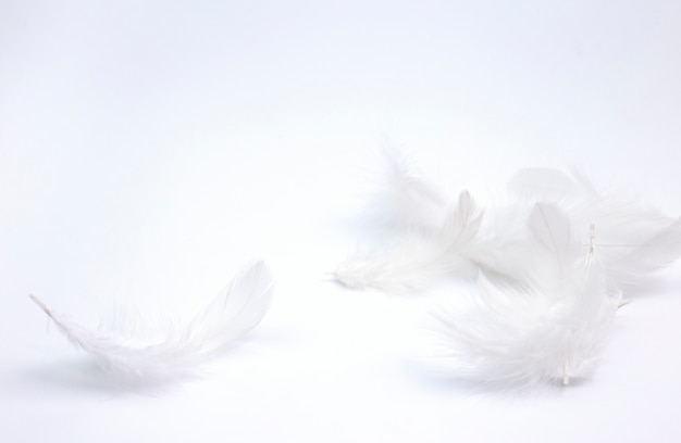 White feathers on white background.