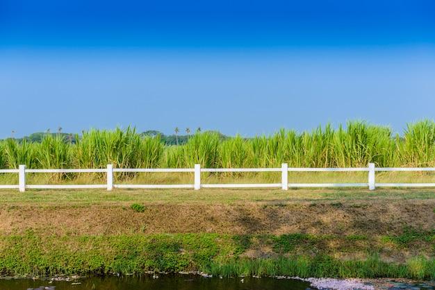White fence in farm
