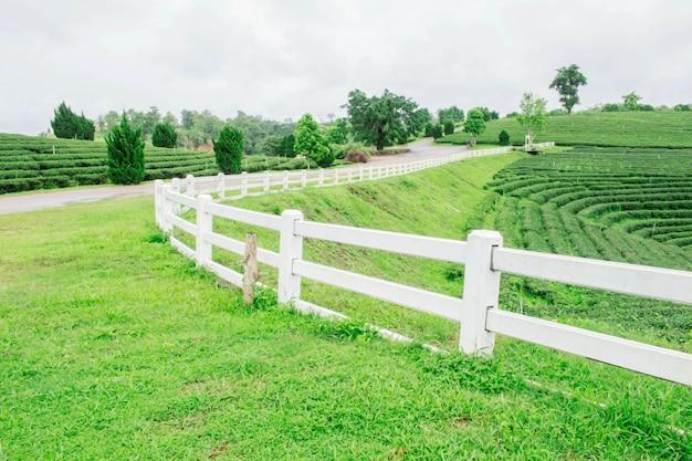 茶畑の白いフェンス。