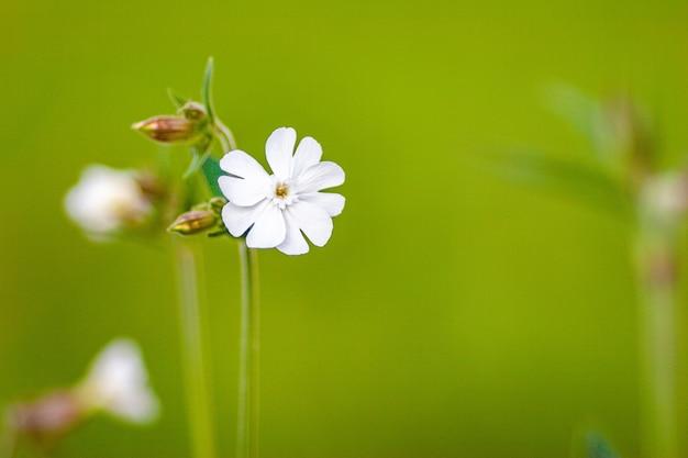 화창한 날에 화이트 필드 꽃
