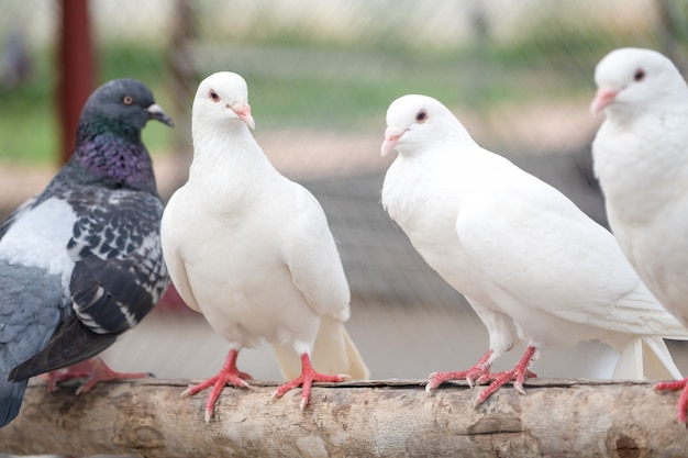 White flock on stem tree