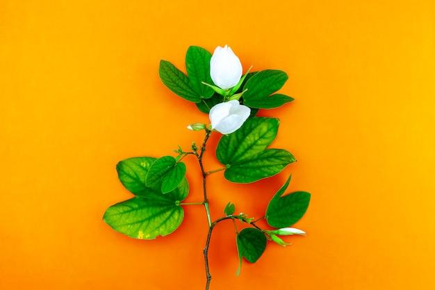 白い花とオレンジ色の紙の背景に葉