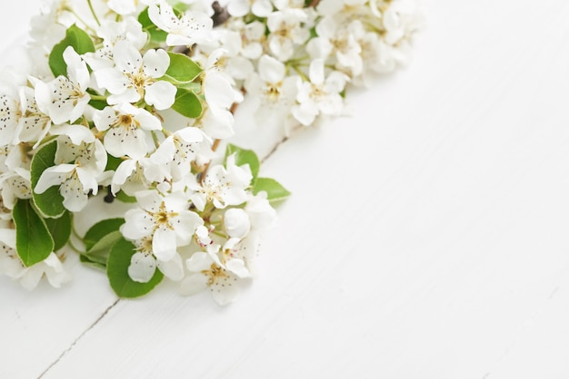 White flower apricot.spring easter flowers cherry flowering. white flower sakura.sunny day. spring flowers. beautiful orchard.springtime