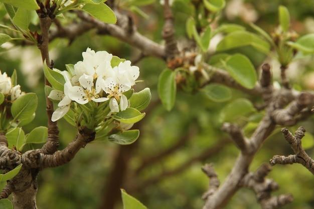 白い花がフィールドの背景にクローズアップ