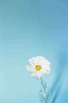 파란색 표면에 흰 꽃 코스모스